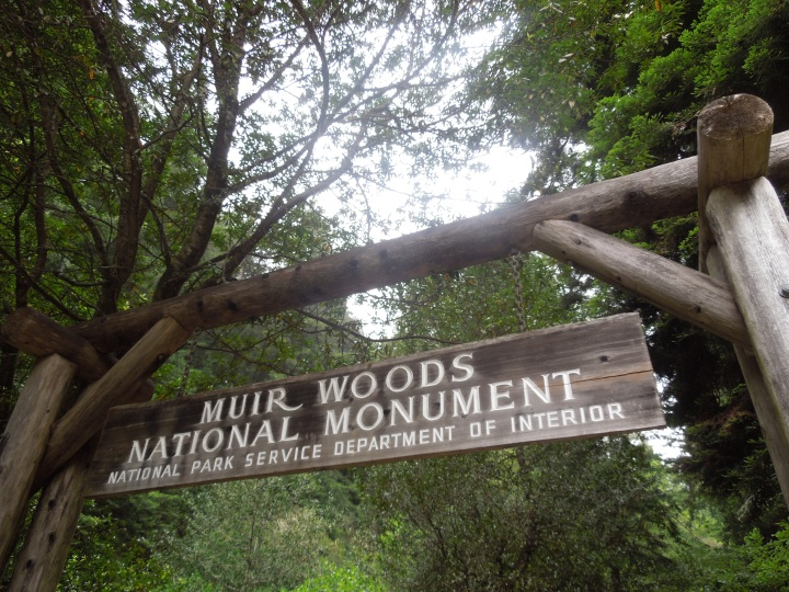 California Love – Muir Woods