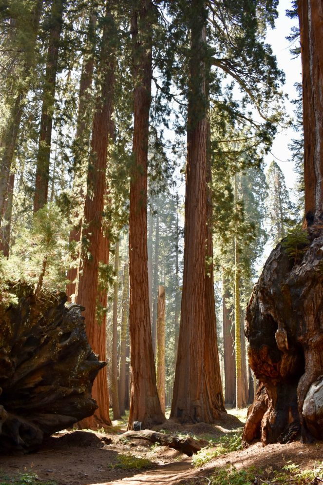 Sugar Pine Trail, Moro Rock, General Sherman Tree, Congress Trail, Crescent Meadow, Giant Sequoias, Sequoia National Forest, Sequoia National Park, Kings Canyon National Park, Sierra National Forest, National Park, California, Camping, Hiking, Land of the Giants